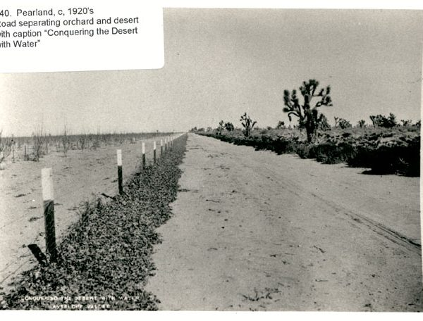 An Antelope Valley road separating an orchard and the desert
