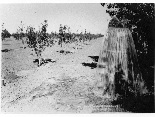 New pear orchard (possibly in Pearland) and water flowing from a standpipe