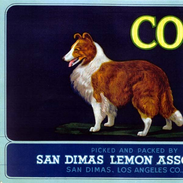 Citrus crate label of the San Dimas Lemon Association