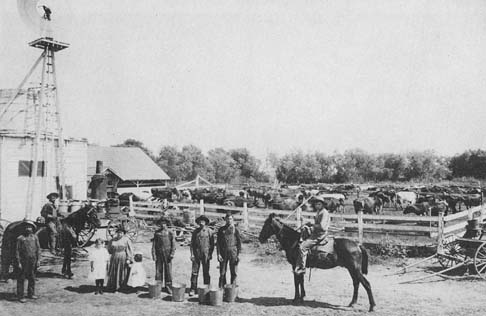 Dairying operations south of Dominguez Hill on the Carson estate