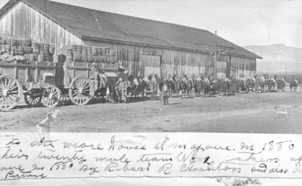 Twenty Mule Team loaded with hay at the John Searles' San Bernardino Borax Company warehouse in Mojave