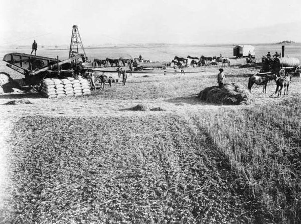 Threshing in La Puente Valley