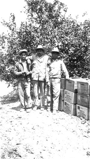 Three citrus pickers in front of North Whittier Heights Citrus Association crates