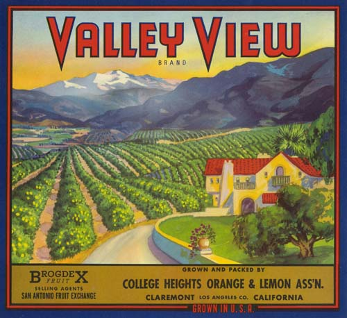 Citrus crate label for the Valley View Brand of the College Heights Orange