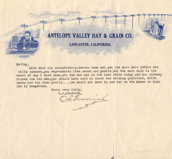 Letter from O. F. Goodrich of the Antelope Valley Hay and Grain Company to a Mr. Kelly regarding a poorly behaved mule., c. 1920s
