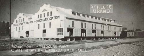 College Heights Orange and Lemon Association packing house, c. 1920