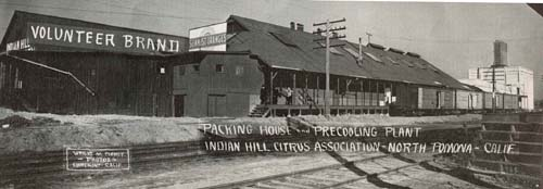 Indian Hill Citrus Association packing house and pre-cooling plant