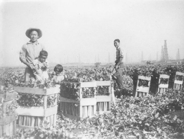 Japanese farm workers and children with the crop in Lomita