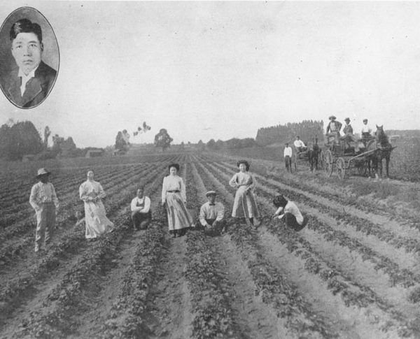 Japanese family in a Gardena strawberry field